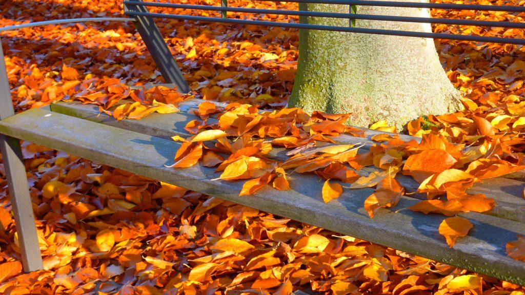 autumn-1756230_1920